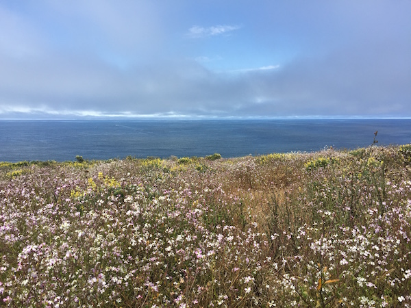 20170624 Tomales Point Trail - 2 Point Reyes