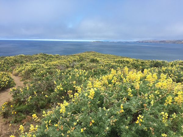 20170624 Tomales Point Trail - 4 Point Reyes