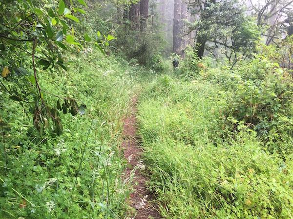 20170625 Sky Trail Coast Trail Point Reyes - 5